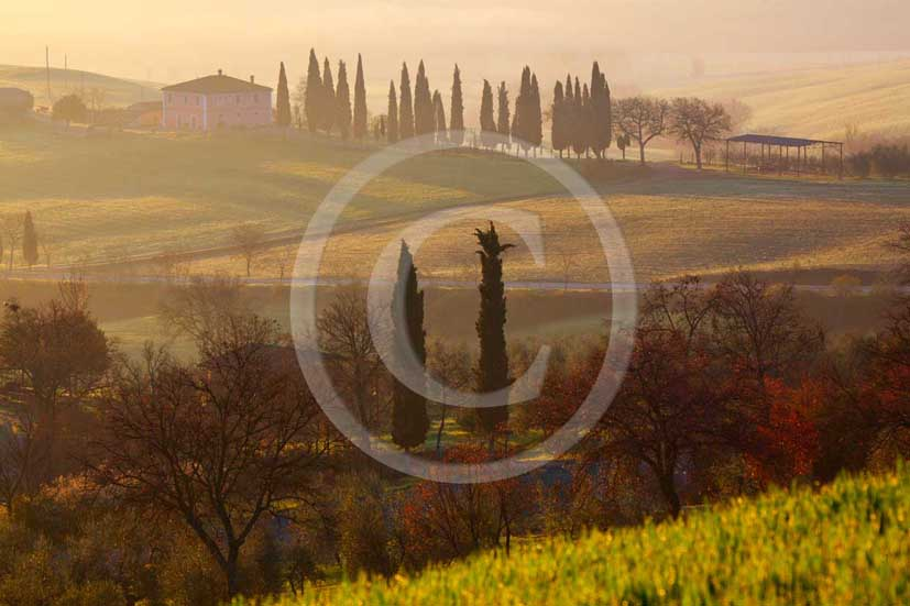 2009 - Landscapes of farm and cipress line on sunrise in spring, near S.Quirico village, Orcia valley, 23 miles south province of Siena.
