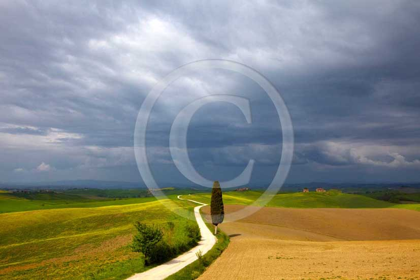 2009 - Landscapes with cipress on traditional tuscan country road before a thunderstorm in spring, near Ville di Corsano village, 11 miles south east Siena province.