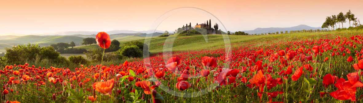 2009 - Panoramic view of farm, cipress and red poppies on early morning in spring, near S.Quirico village, Orcia valley, 21 miles south the province of Siena.