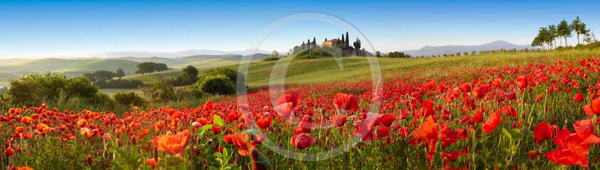 2009 - Panoramic view of farm, cipress and red poppies in spring, near S.Quirico village, Orcia valley, 21 miles south the province of Siena.