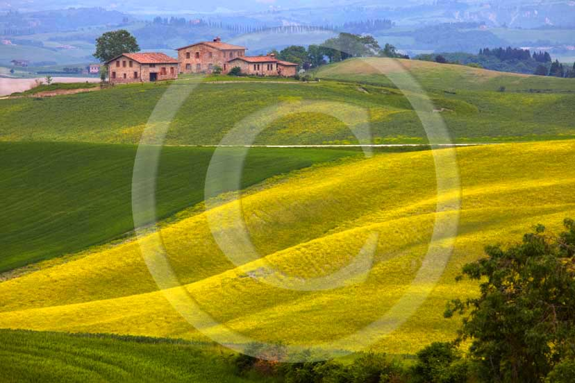 2009 - Landscapes and farm with yellow colsa flower in spring, near Ville di Corsano village, 11 miles south east Siena province.