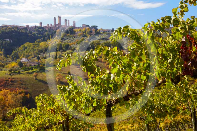 2009 - Landscapes of vineyards with S.Gimignano medieval village in background on autumn in early morning, Elsa valley, Chianti land, 30 km south Florence province.