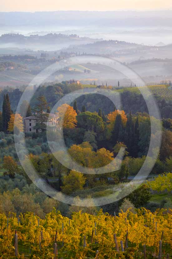2009 - Landscapes of yellow vineyards and farm S.Gimignano medieval village on autumn in early morning with fog, Elsa valley, Chianti land, 30 km south Florence province.