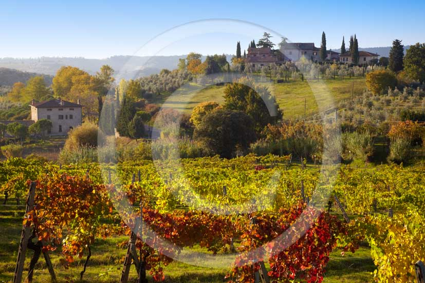 2009 - Landscapes of yellow and red vineyards with farm near S.Gimignano medieval village on autumn in early morning, Elsa valley, Chianti land, 30 km south Florence province.
