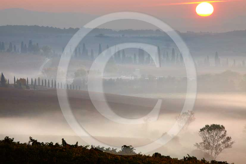 2009 - Landscapes of vineyards and cipress on sunrise with fog in autumn, near Quercegrossa village, Chianti land, 15 miles north Siena province.