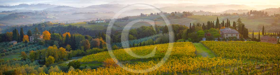 2009 - Panoramic view of yellow vineyards and farm S.Gimignano medieval village on autumn in early morning with fog, Elsa valley, Chianti land, 30 km south Florence province.