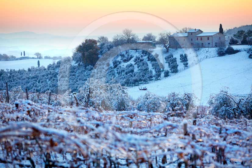 2009 - Landscapes of vineyards, olive trees and farm with snow in winter on sunrise, near Ville di Corsano place, 8 miles south Siena province.