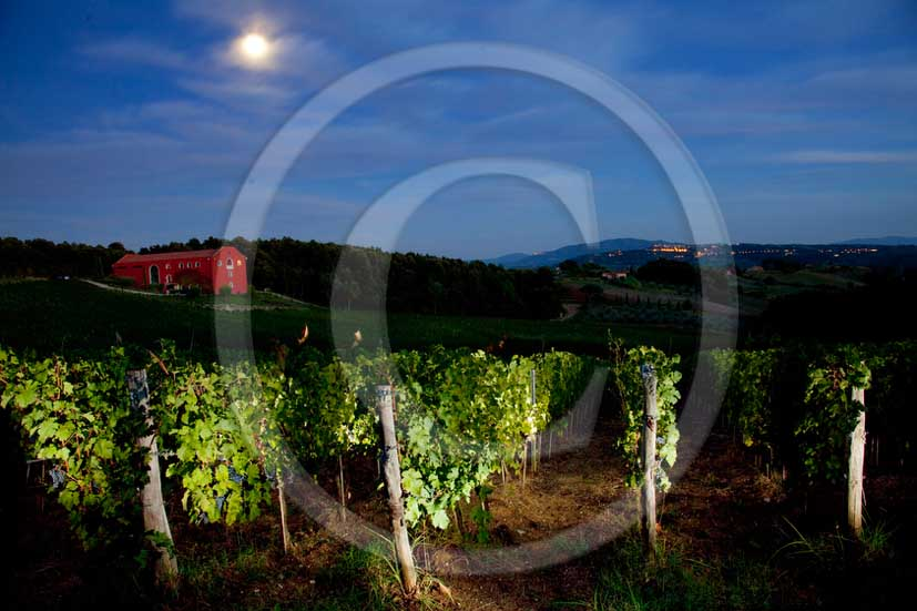 2011 - Night view of vineyards in Caiarossa vineery near Riparbella village in Val di Sole valley.