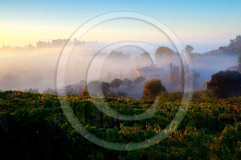 2011 - view on sunrise with fog of vineyards and farm near San Gimignano village in Chianti Classico land.