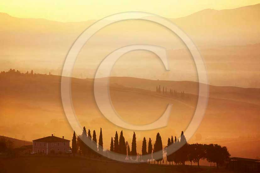 2011 - Cypress ans tuscan skyline with farm and cipress at sunrise in Orcia valley.
