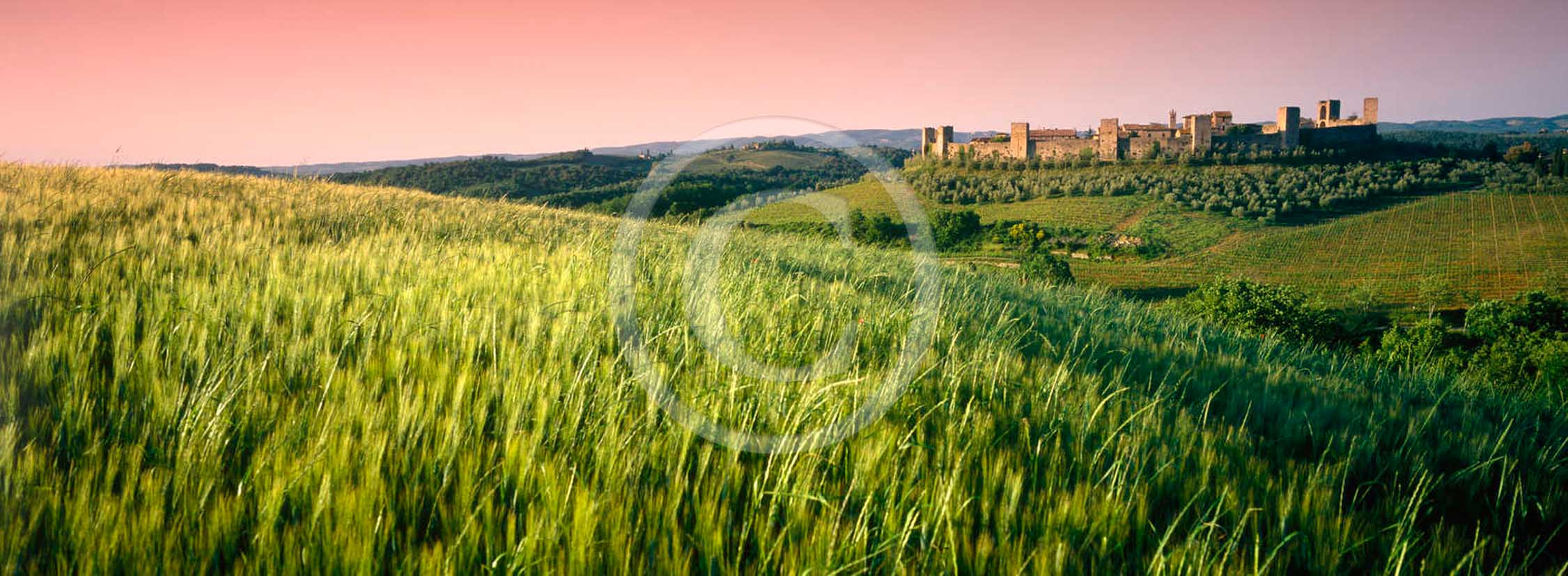 2011 - Panoramic view of Monteriggioni medieval village on sunset with green filed of bead in Chianti Classico land.