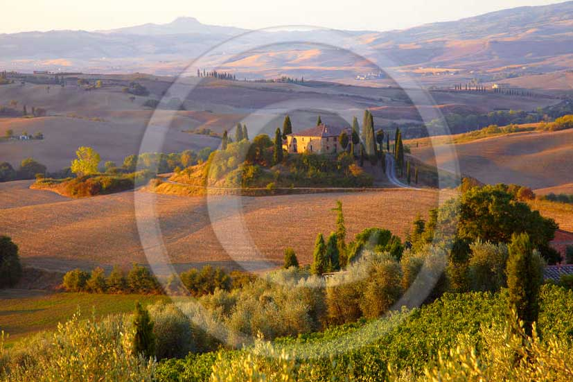 2011 - View in autumn on sunset of farm with and yellow vineyards in Orcia valley near San Qurico Orcia.