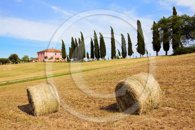 2011 - Tuscan farm with rools of bead and cypress in Orcia valley.