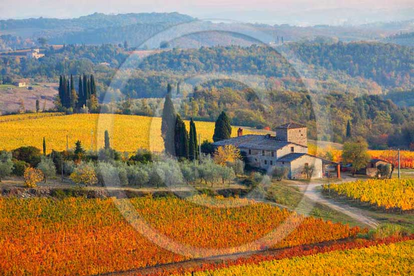 2011 - View of yellow red orange green colorated vineyards with farm near Monti di Sopra village in autumn in Chianti Classico land.