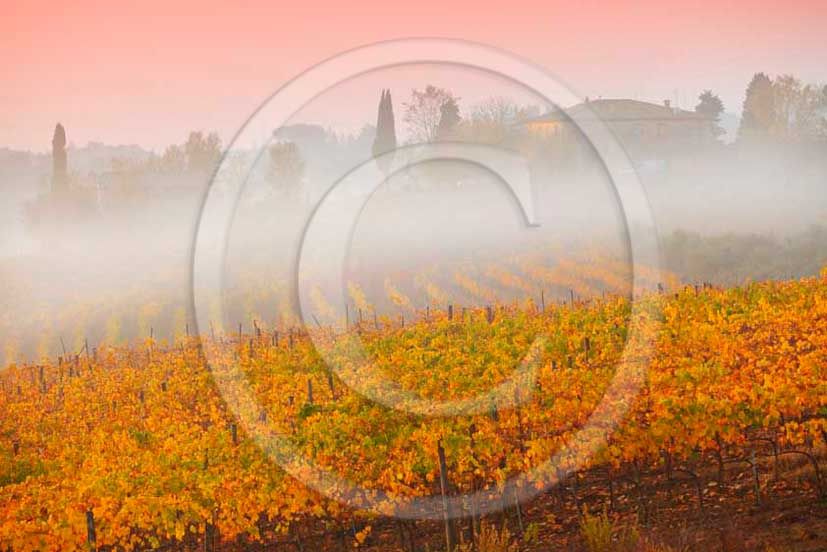 2011 - View of foggy sunrise with yellow red orange green colorated vineyards in autumn in Chianti Classico land.