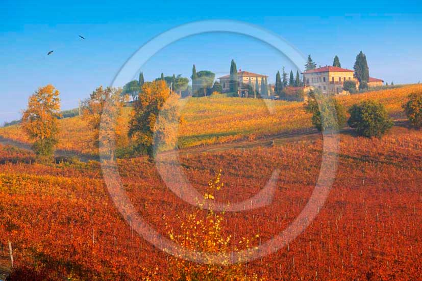 2011 - View of yellow red orange green colorated vineyards with farm in autumn in Chianti Classico land.