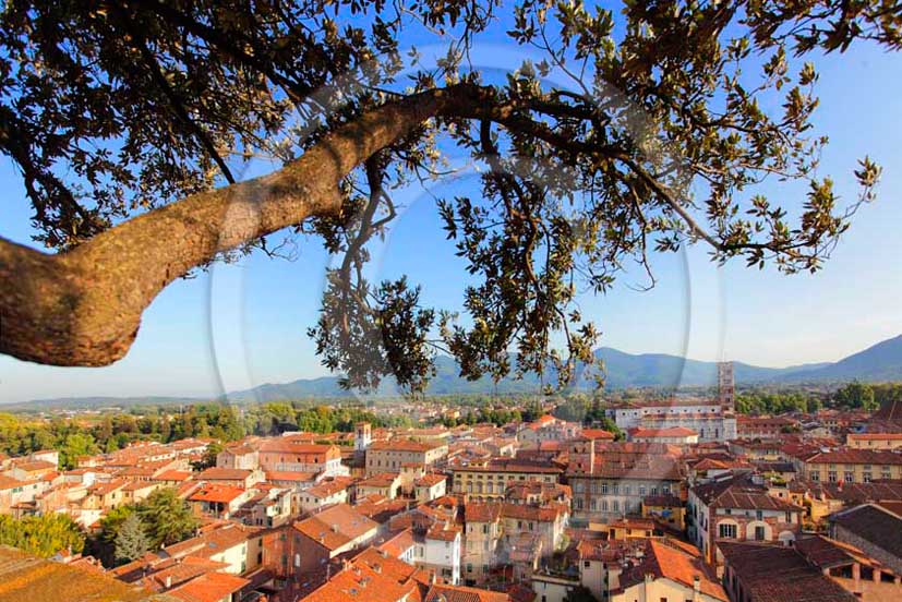 2011 - View of the medieval town of Lucca.